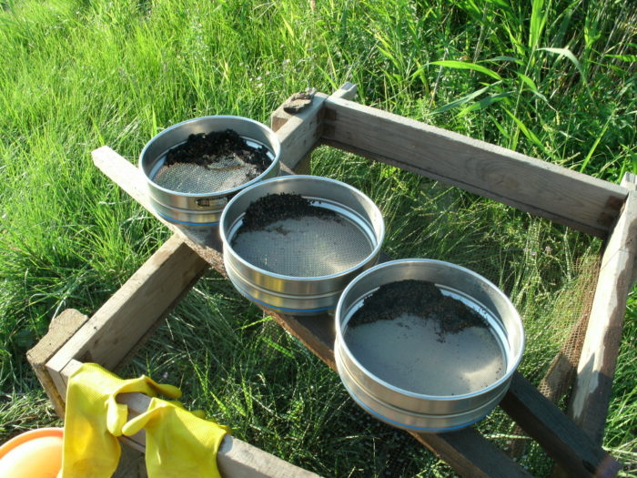 Ausgeschlämmte Pflanzenreste in Testsieben
